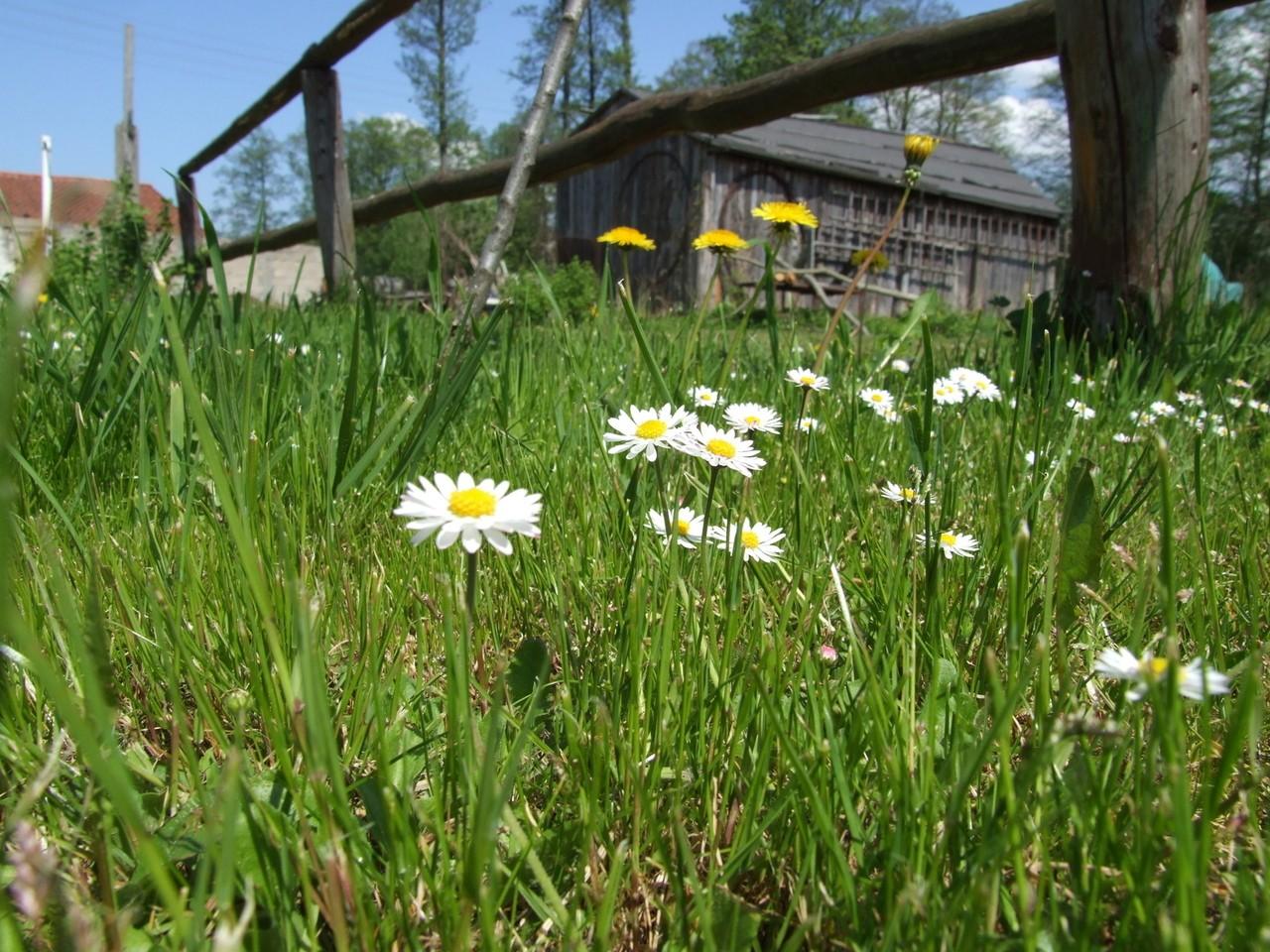 Odchwaszczanie trawnika