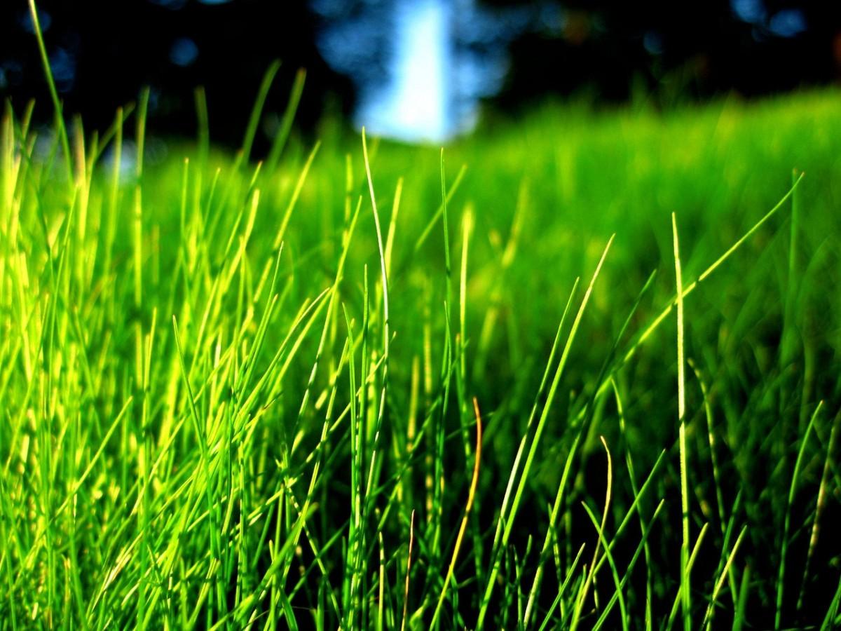 Preparaty chwastobójcze do trawników