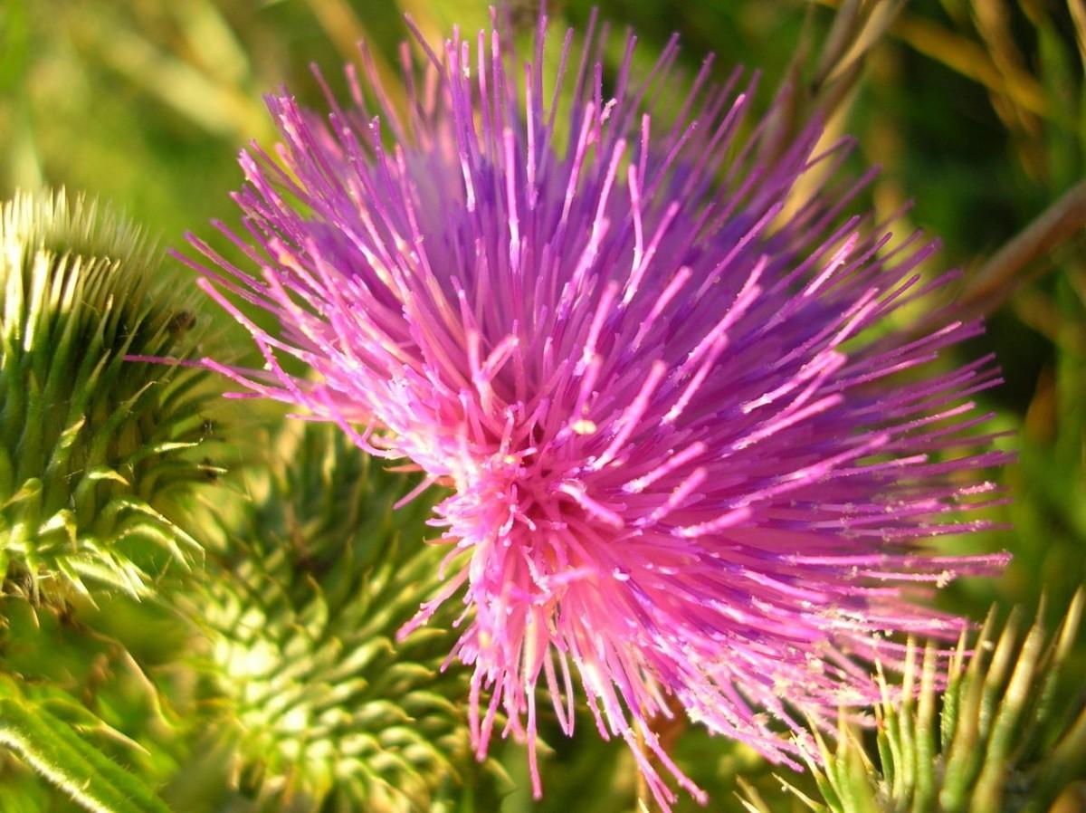 Środki chwastobójcze – herbicydy