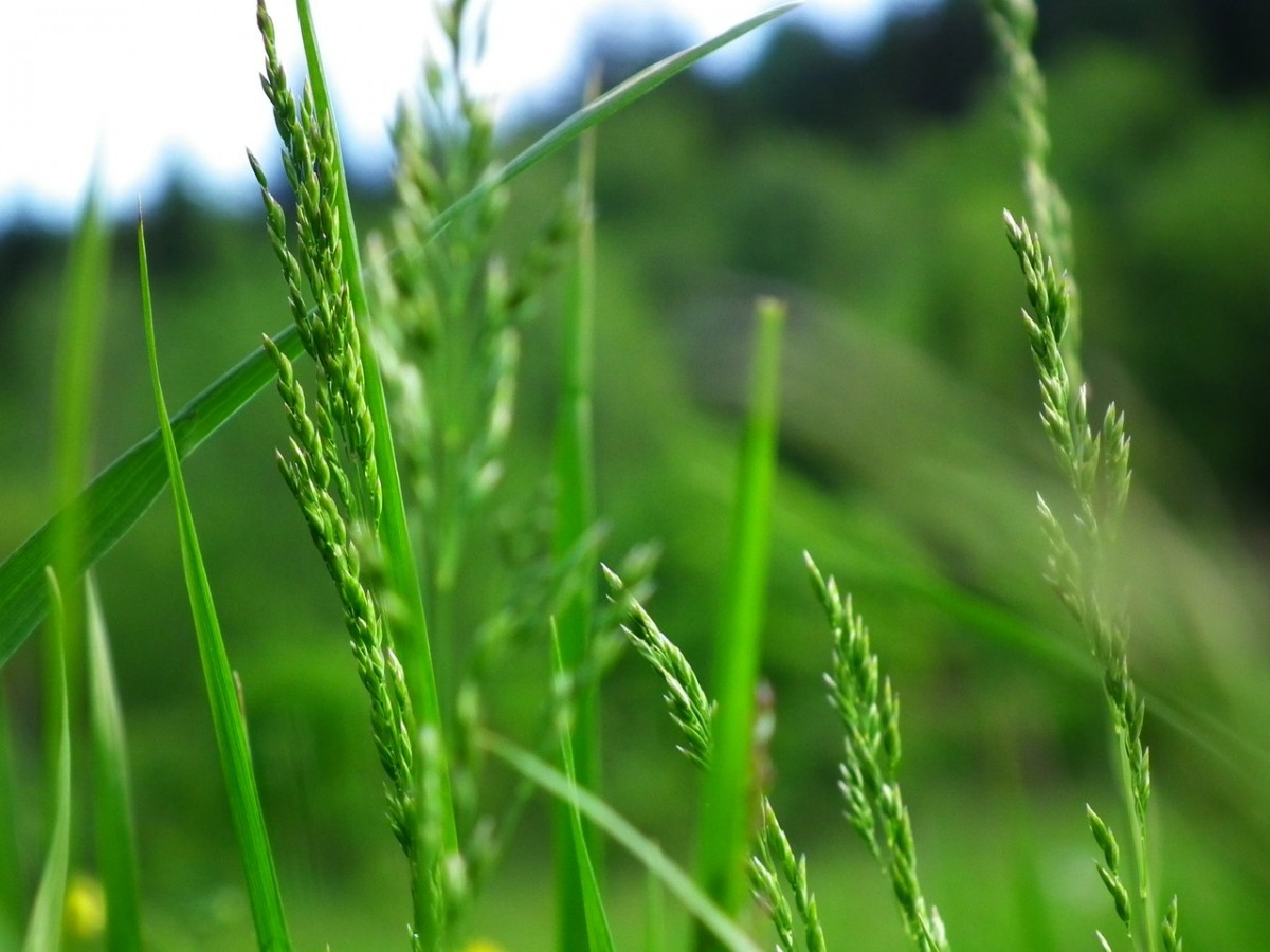 Zagrożenie upraw polnych